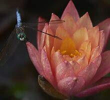 Dragon Fly and Water Lily by Denise Worden
