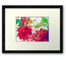 Mixed color Poinsettias 1 Serene Framed Print