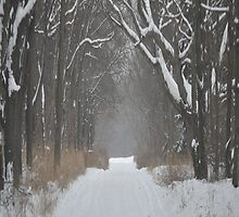 Snowy Road by eawhite2012