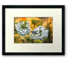 White & Colours Framed Print