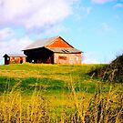 BARN ON A HILL by Pauline Evans