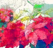 Mixed color Poinsettias 3 Serene by Christopher Johnson