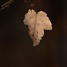 Last Leaf, Autumn by Denise Worden