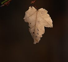 Last Leaf, Autumn by Denise Worden