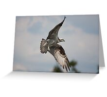 Osprey Circling her Nest Greeting Card