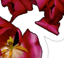 Tulips in Pink and Purple Sticker