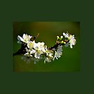 Spring, Spring, Spring by lynn carter