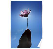 Flowering Poster