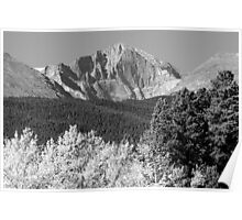 Longs Peak Autumn Aspen Landscape View BW Poster