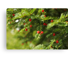 Merry Christmas To Yew Canvas Print