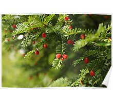 Merry Christmas To Yew Poster