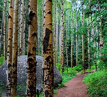 Aspen Grove on Devils Head by 2oceans1