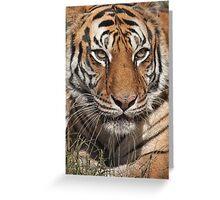 Tia Tiger, Conservators Center, NC Greeting Card