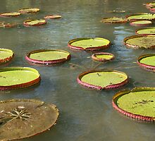 Water-lily by NataliaBarros