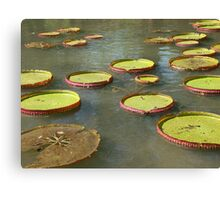 Water-lily Canvas Print