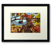 Autumn In The Wine Country Framed Print