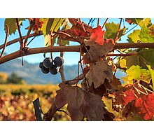 Autumn In The Wine Country Photographic Print