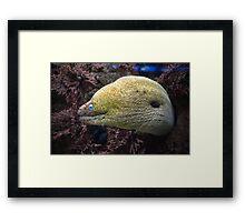 Green Moray Eel Framed Print