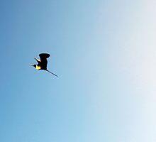 Frigatebird by Burr Tweedy