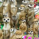 Meerkat.stall by pix-elation