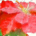 Mottled Red Poinsettia 1 Ephemeral Serene by Christopher Johnson