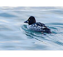 Female Common Goldeneye Duck at Harbourfront Photographic Print