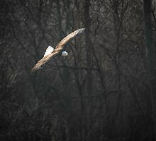 Flying The River by Thomas Young