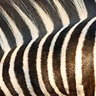 Stripes!! by jozi1
