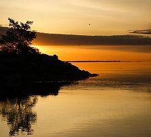 Orange Sunrise by Georgia Mizuleva