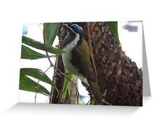 Blue Faced Honey Eater Greeting Card