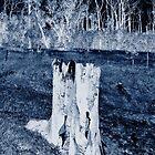 Stump by kiwilover