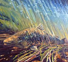 Brown Trout Holding Low by Robert Sullivan