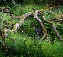 Fallen Tree - Colour by Paul Croxford