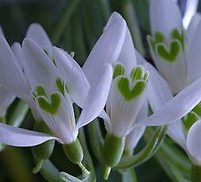Green Hearts by Lynn Gedeon