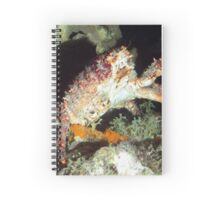 Caribbean Hairy Clinging Crab Spiral Notebook