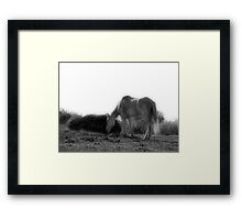 The Old Gray Mare Framed Print