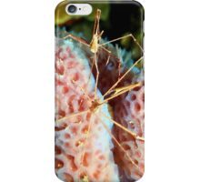 Arrow Crabs Playing at Night iPhone Case/Skin