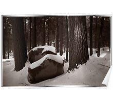 Sunlight on a Winter Woods Poster