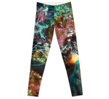 Banded Coral Shrimp Leggings