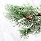 Icy pine by TOM KLAUSZ