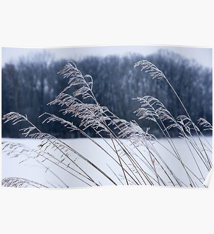 Frozen Grass in a Snowy Landscape Poster