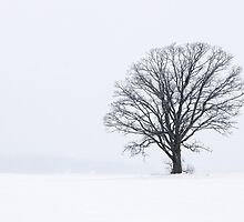 Snowy Tree Silhouette Landscape by Mike Koenig