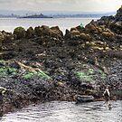 Grey seals on Inchcolm by Tom Gomez
