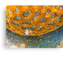 Underwater living coral Canvas Print