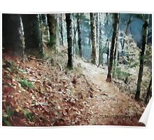 Hiking Trail Through The Woods Poster