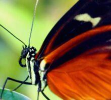 Macro Orange and Black Butterfly Sticker