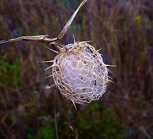 The Skeleton Ball by Raymond Park