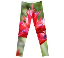 Red Tropical Plant Leggings