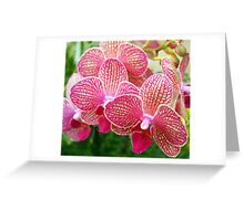 Pink and White Orchids Greeting Card