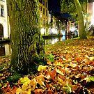 nightly leaves by annet goetheer